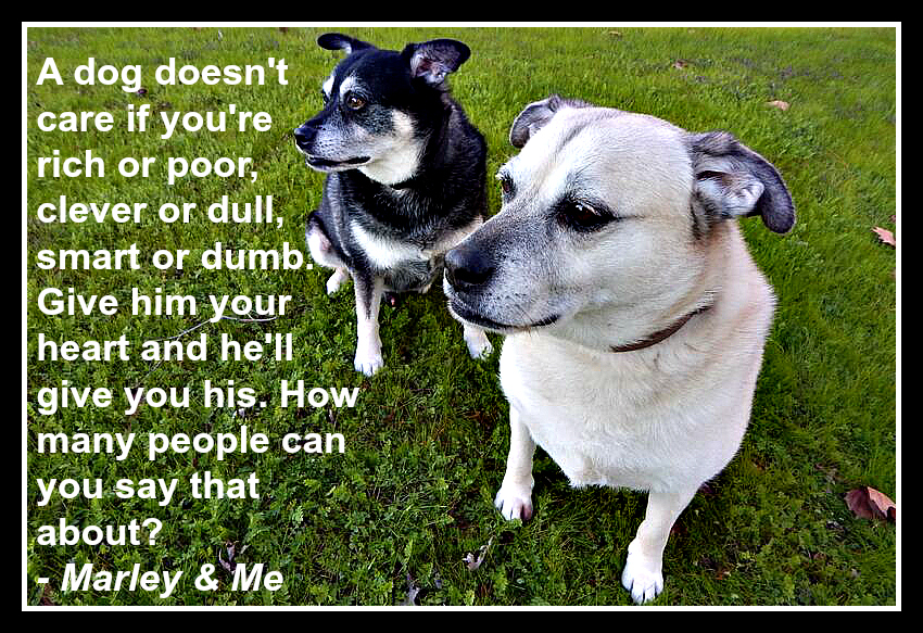 dog quote marley and me