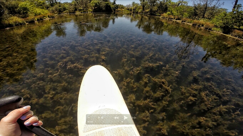 paddle boarding underwater forest