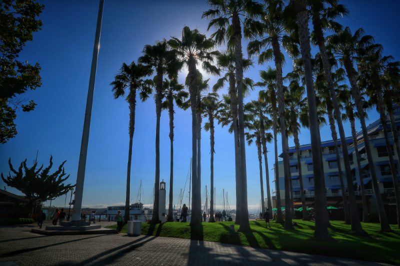 jack-london-square-palm-trees